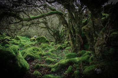 Mossy Forest 9 art print by Duncan for $43.75 CAD