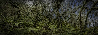 Mossy Forest Panorama art print by Duncan for $42.50 CAD