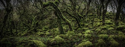 Mossy Forest Panorama 2 art print by Duncan for $45.00 CAD