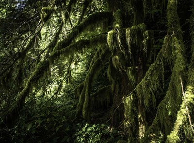 Mossy Tempered Forest art print by Duncan for $47.50 CAD