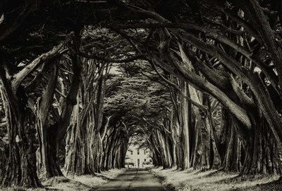 Cypress Trees Sepia art print by Duncan for $45.00 CAD