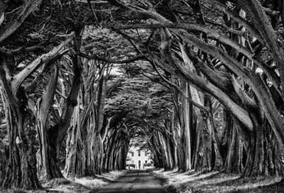 Cypress Trees Black & White art print by Duncan for $45.00 CAD