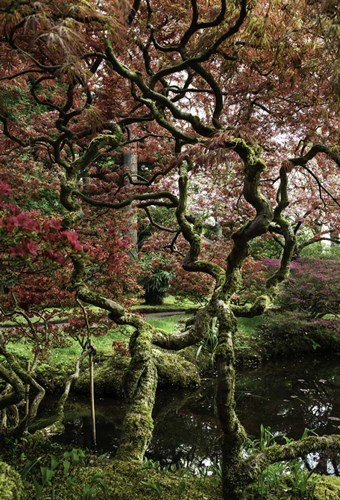 Japanese Garden Tree art print by Duncan for $43.75 CAD