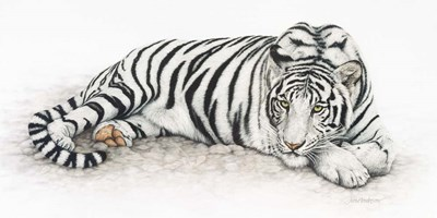 Siberian Tiger art print by Jan Henderson for $37.50 CAD