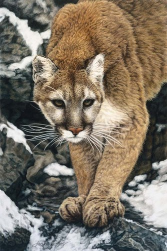 Silent Approach art print by Jan Henderson for $43.75 CAD