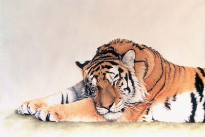 Sleeping Tiger art print by Jan Henderson for $43.75 CAD