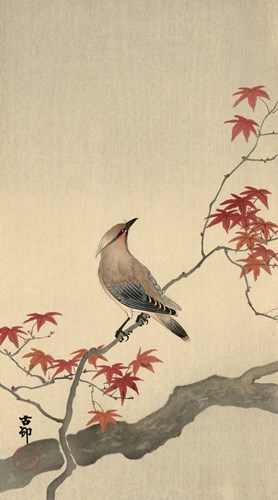 Japanese Waxwing on Maple, 1900-1936 art print by Ohara Koson for $48.75 CAD