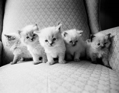 Five Kittens art print by Kim Levin for $42.50 CAD