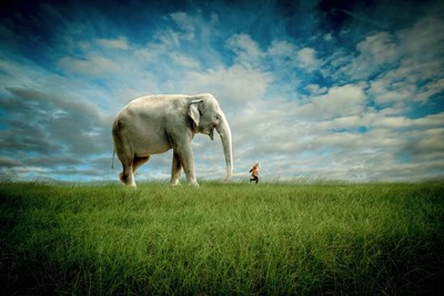Elephant Follow Me art print by Jeff Madison for $43.75 CAD