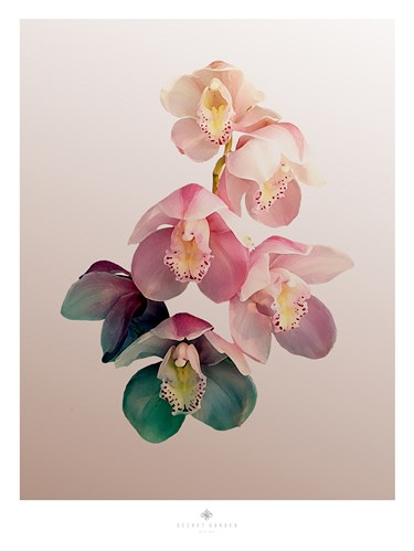 Orchidee art print by Heaven on 3rd for $41.25 CAD