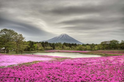 Mount Fuji Pink Moss art print by Nick Jackson for $43.75 CAD