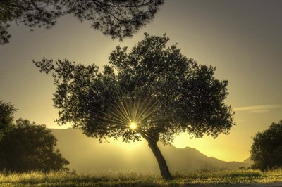 Sunburst Through a Tree Los Angeles art print by Nick Jackson for $43.75 CAD