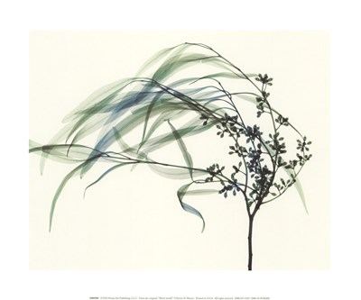 Wind art print by Steven N. Meyers for $15.00 CAD