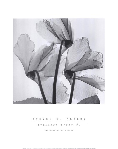 Cyclamen Study No.1 art print by Steven N. Meyers for $15.00 CAD
