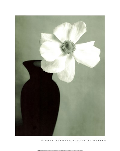 Single Anemone art print by Steven N. Meyers for $25.00 CAD