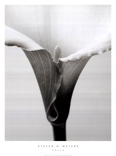 Calla art print by Steven N. Meyers for $37.50 CAD