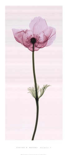 Anemone I art print by Steven N. Meyers for $31.25 CAD