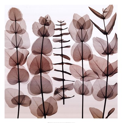 Eucalypti II (Middle) art print by Steven N. Meyers for $37.50 CAD