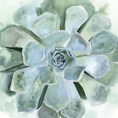 Verdant Succulent III art print by Victoria Borges for $53.75 CAD