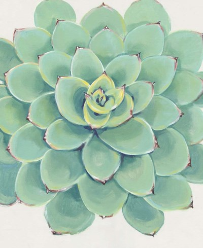 Pastel Succulent III art print by Timothy O'Toole for $61.25 CAD