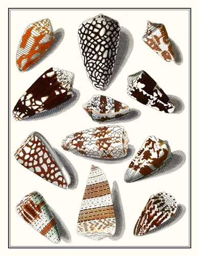 Collected Shells V art print by Vision Studio for $96.25 CAD