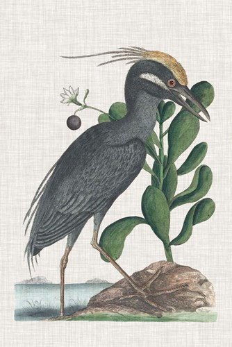 Catesby Heron I art print by Marc Catesby for $60.00 CAD