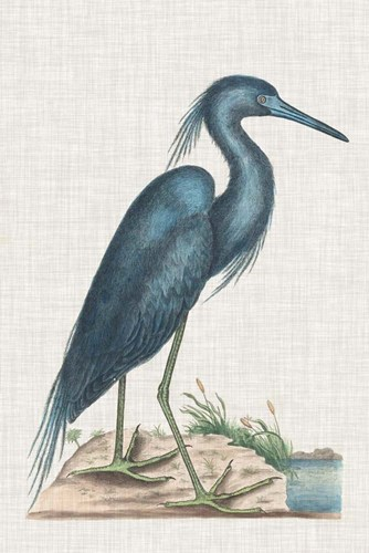 Catesby Heron II art print by Marc Catesby for $60.00 CAD