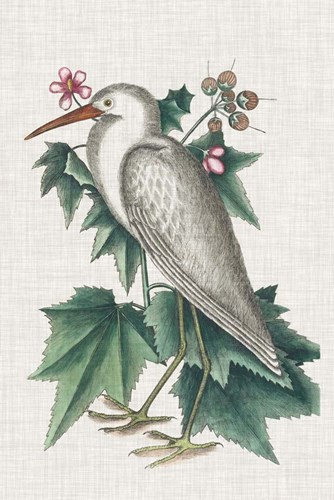 Catesby Heron III art print by Marc Catesby for $60.00 CAD