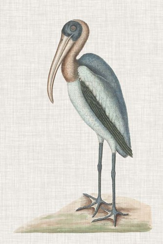 Catesby Heron IV art print by Marc Catesby for $123.75 CAD