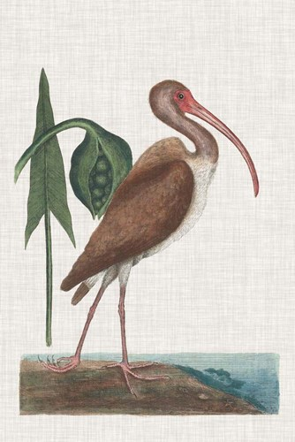 Catesby Heron V art print by Marc Catesby for $60.00 CAD