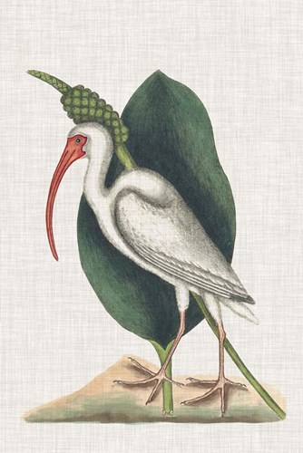 Catesby Heron VI art print by Marc Catesby for $60.00 CAD
