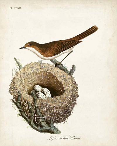 Lesser White-Throat and Nest art print by John Latham for $53.75 CAD