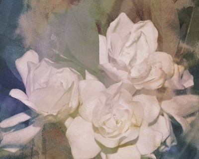 Blush Gardenia Beauty II art print by Sharon Chandler for $53.75 CAD