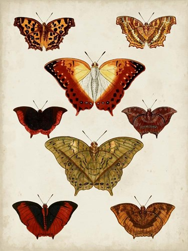 Butterflies Displayed I art print by Vision Studio for $63.75 CAD
