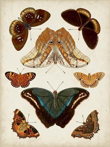 Butterflies Displayed II art print by Vision Studio for $63.75 CAD