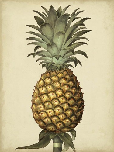 Brookshaw Antique Pineapple I art print by George Brookshaw for $38.75 CAD