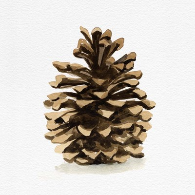 Conifer Cone I art print by Emma Caroline for $32.50 CAD