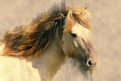 Blended Horse I art print by Kim Curinga for $97.50 CAD