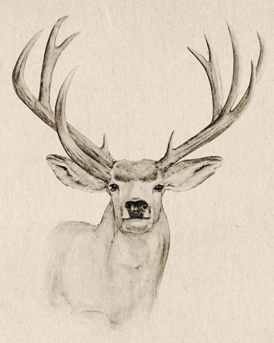 Natural Buck I art print by Annie Warren for $53.75 CAD