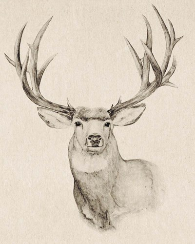 Natural Buck II art print by Annie Warren for $53.75 CAD