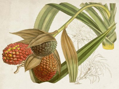 Tropical Foliage & Fruit III art print by Curtis for $63.75 CAD