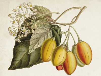 Tropical Foliage & Fruit IV art print by Curtis for $63.75 CAD