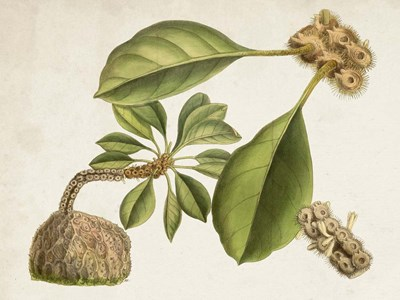 Tropical Foliage & Fruit V art print by Curtis for $63.75 CAD