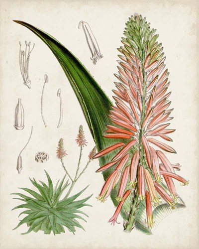 Delicate Tropicals I art print by Curtis for $53.75 CAD