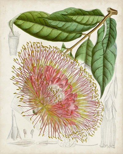 Delicate Tropicals IV art print by Curtis for $53.75 CAD