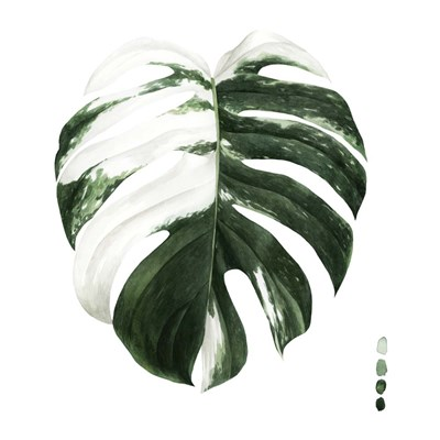Variegated Monstera II art print by Grace Popp for $53.75 CAD