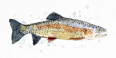Watercolor Rainbow Trout I art print by Emma Caroline for $50.00 CAD