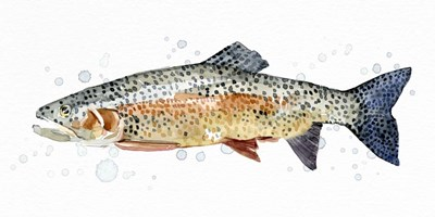 Watercolor Rainbow Trout II art print by Emma Caroline for $50.00 CAD