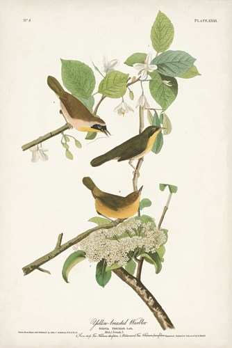 Pl. 23 Yellow-breasted Warbler art print by John James Audubon for $60.00 CAD
