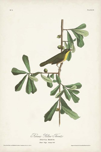 Pl. 24 Roscoe's Yellow Throat art print by John James Audubon for $60.00 CAD